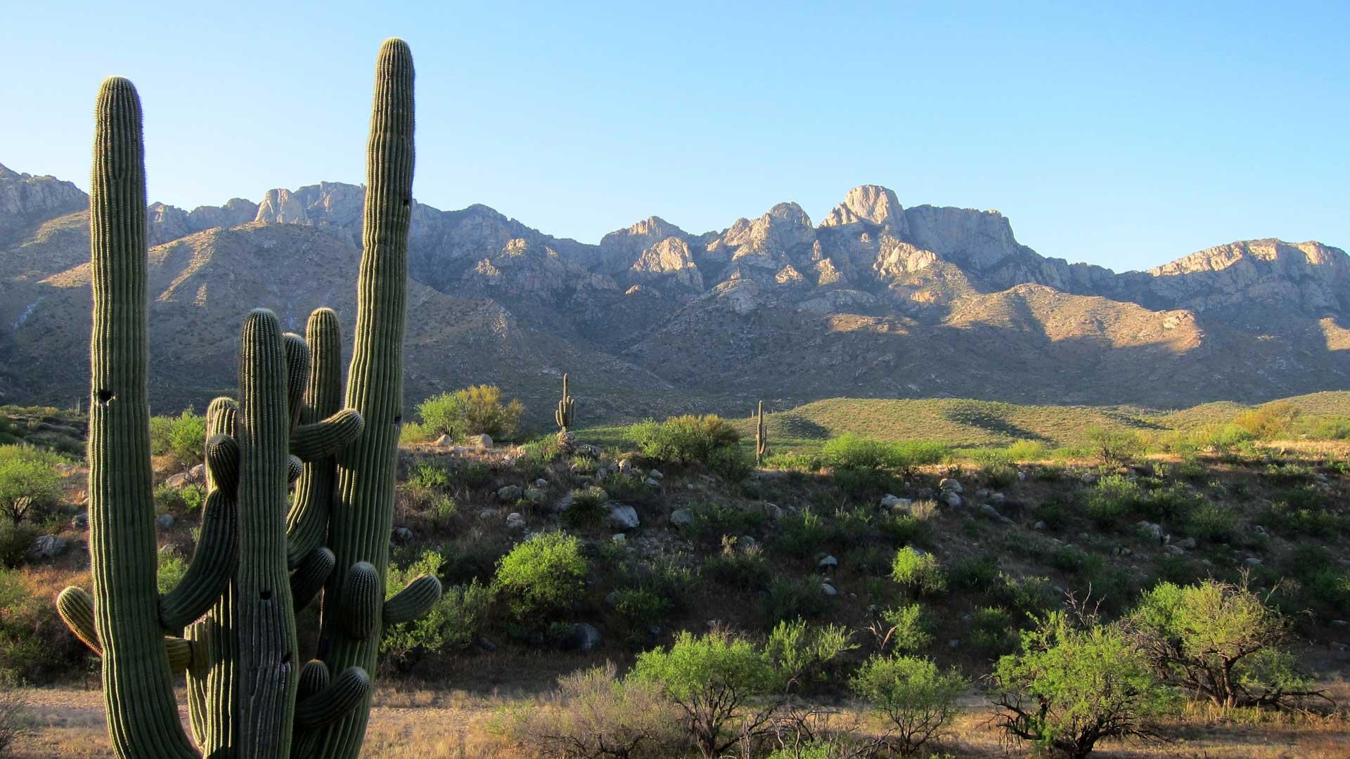 Santa Catalina Mountains | Coalition for Sonoran Desert Protection